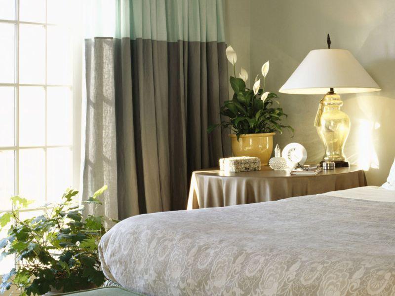 Какие для спальни выбрать комнатные растения