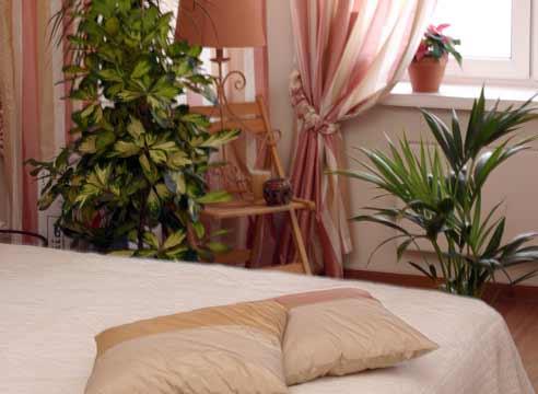 Какие цветы ставят в спальне: советы по выбору